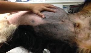 Verwijderen van een lipoma 5,150 kg (vetgezwel) – voor